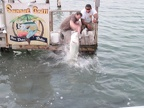 Ken feeding the tarpon by hand (with sardines)