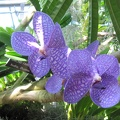 Orchids at Botanical Gardens near Capitol